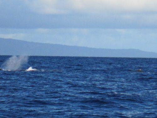 Jan. 2011 133